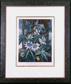 Robert John Thornton Dr Robert John Thornton The Blue Passion Flower 1800 - 1548231
