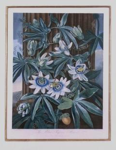 Robert John Thornton Dr Robert John Thornton The Blue Passion Flower 1800 - 1548232