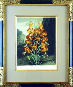 Robert John Thornton Dr Robert John Thornton The Superb Lily 1799 - 1548209