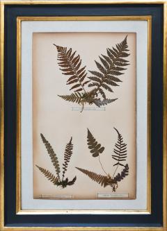 SET OF TWELVE FRAMED 19TH CENTURY PRESSED FERNS - 1272579