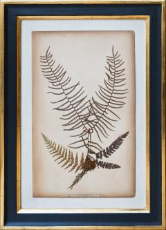 SET OF TWELVE FRAMED 19TH CENTURY PRESSED FERNS - 1272581