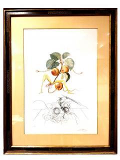 Salvador Dal Salvador Dali Apricot Original Hand Signed Lithograph - 1049286