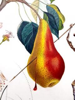 Salvador Dal Salvador Dali Don Quixote Pear Original Hand Signed Lithograph - 1049562