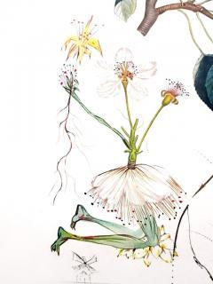 Salvador Dal Salvador Dali Don Quixote Pear Original Hand Signed Lithograph - 1049563