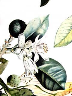 Salvador Dal Salvador Dali Erotic Grapefruit Original Hand Signed Lithograph - 1049393