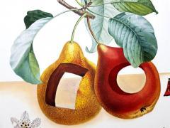 Salvador Dal Salvador Dali Fruits With Holes Original Hand Signed Lithograph - 1049430