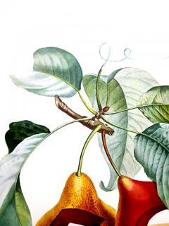 Salvador Dal Salvador Dali Fruits With Holes Original Hand Signed Lithograph - 1049433