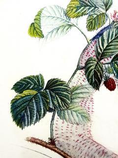 Salvador Dal Salvador Dali Raspberry Original Hand Signed Lithograph - 1049424