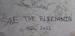 Sax Berlin Save The Elephant - 1882263