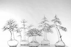 Simone Crestani Bonsai 17 005 from the Landscape Work - 328184