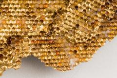Sophie Coryndon Sophie Coryndon Hoard Nimbus II UK - 1795501