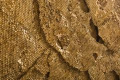 Sophie Coryndon Sophie Coryndon Tapestry UK 2016 - 218083