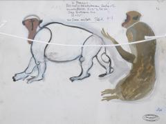 Standing macaque gouache by Henri Samouilov - 1978961