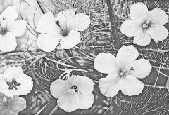Steven Bitteroff American 20th century Flowers 5 Acrylic on canvas - 1903826