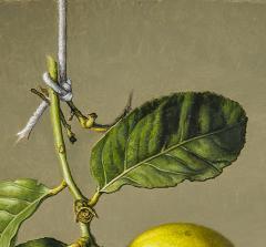 Stone Roberts Two Lemons - 698345