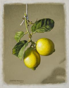 Stone Roberts Two Lemons - 698348