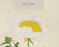 Tally Ho Japanese Peony - 2081155
