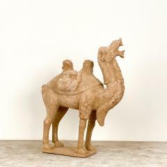 Tang Dynasty Dromidary China 8th Century - 2131148
