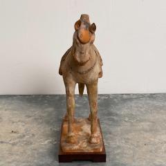 Tang Dynasty Horse China Circa 7th Century - 1580262