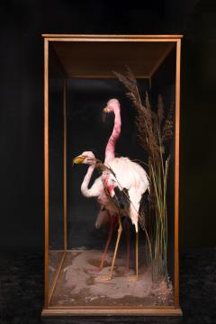 Taxidermy Composition of Three Flamingos in Glass Case - 2000397