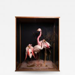 Taxidermy Composition of Three Flamingos in Glass Case - 2002626