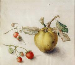 Teresa Berenice Vitelli A Peach with Two Strawberry Vines - 175568