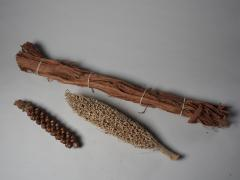 Three dried Botanica Specimens - 1910154