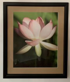 Tulip Blooming Stages Photography Set of Five Matted Framed - 1592510