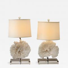 Unknown Artist Pair Of Coral Table Lamps On Lucite Base   324511