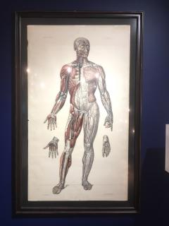 Vascular System by Doctor Bourgery and artist Jacob - 794034
