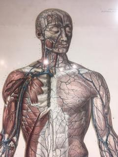 Vascular System by Doctor Bourgery and artist Jacob - 794040