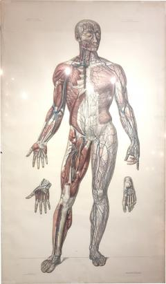 Vascular System by Doctor Bourgery and artist Jacob - 794977
