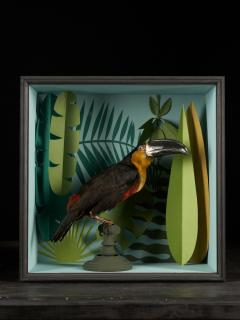 Vintage Toucans Taxidermy Selection in Designer Display Cases  - 2024276