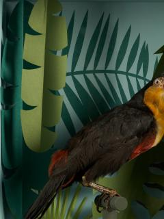 Vintage Toucans Taxidermy Selection in Designer Display Cases  - 2024278