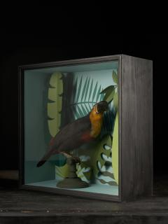 Vintage Toucans Taxidermy Selection in Designer Display Cases  - 2024279