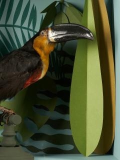 Vintage Toucans Taxidermy Selection in Designer Display Cases  - 2024280