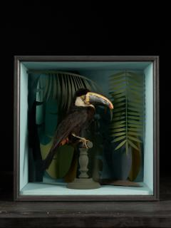Vintage Toucans Taxidermy Selection in Designer Display Cases  - 2024348