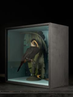 Vintage Toucans Taxidermy Selection in Designer Display Cases  - 2024351
