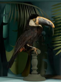 Vintage Toucans Taxidermy Selection in Designer Display Cases  - 2024352