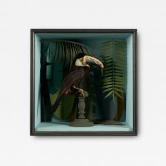 Vintage Toucans Taxidermy Selection in Designer Display Cases  - 2024402