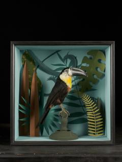 Vintage Toucans Taxidermy Selection in Designer Display Cases  - 2024379