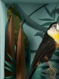 Vintage Toucans Taxidermy Selection in Designer Display Cases  - 2024382