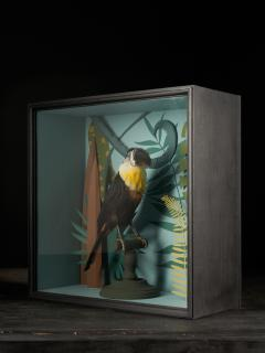 Vintage Toucans Taxidermy Selection in Designer Display Cases  - 2024383