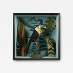 Vintage Toucans Taxidermy Selection in Designer Display Cases  - 2024403