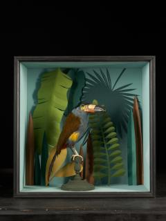 Vintage Toucans Taxidermy Selection in Designer Display Cases  - 2024396
