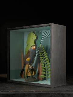 Vintage Toucans Taxidermy Selection in Designer Display Cases  - 2024397
