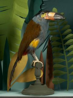 Vintage Toucans Taxidermy Selection in Designer Display Cases  - 2024400
