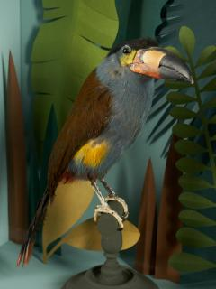 Vintage Toucans Taxidermy Selection in Designer Display Cases  - 2024404