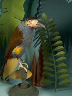 Vintage Toucans Taxidermy Selection in Designer Display Cases  - 2024406