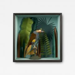 Vintage Toucans Taxidermy Selection in Designer Display Cases  - 2024470